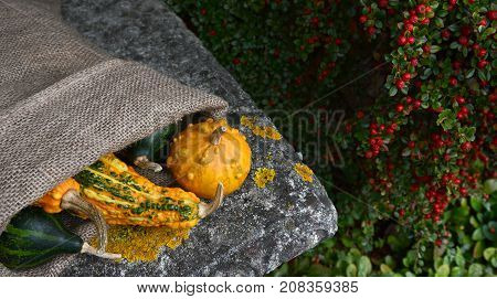 Hessian Sack Of Unusual Warty Orange And Green Gourds