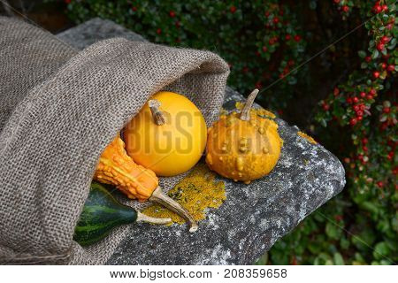 Warty Ornamental Gourd With Jute Sack Of Colourful Squashes