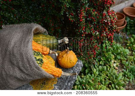 Rough Hessian Sack Of Warty Gourds On Stone Bench