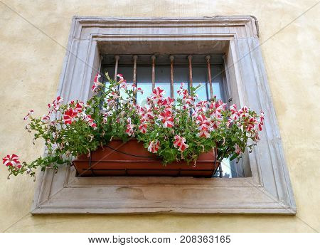 Window of an ancient building decorated with flowers Italy