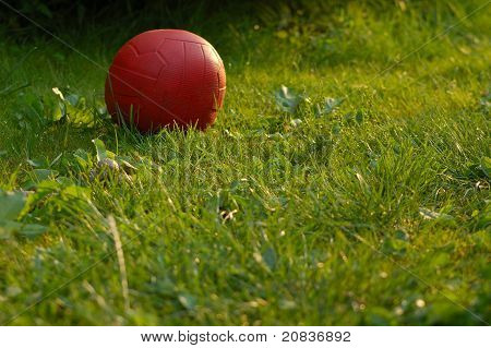 ball in the grass