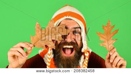 Man In Hat Holds Oak Tree Leaves On Green Background