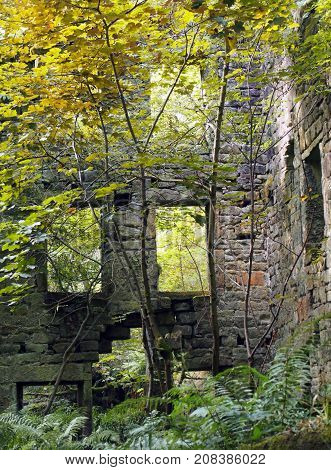 the ruins of staups mill overgrown with trees and ferns in autumn near hebden bridge west yorkshire with crumbling walls and empty windows