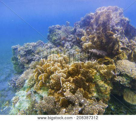 Underwater landscape with coral wall. Coral undersea photo. Seashore texture. Coral closeup. Sea bottom with young coral ecosystem. Tropical seashore snorkeling. Marine relief landscape. Tropic lagoon