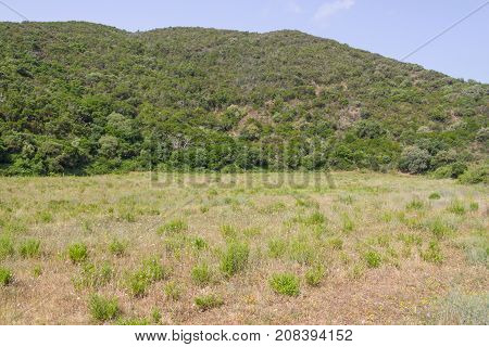 Vegetation, Mountain And Forest In Carrapateira