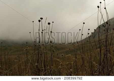 gloomy valley in the mountains covered with a cloud visible through the dry stems of the autumn weeds