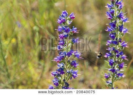 blaue Wildblumen auf der sommerwiese