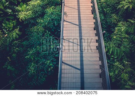 Top view wooden sky walk or walkway cross over treetop surrounded with green natural and sunlight in vintage style.