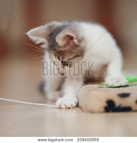 Small kitten on a floor plays with a toy.