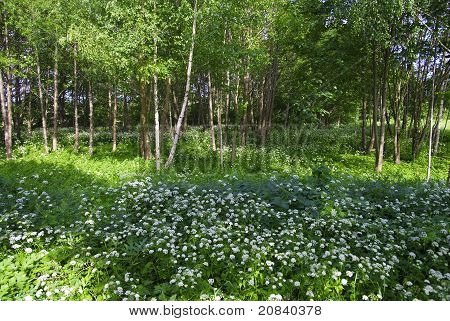 Frühling-Gesamtstruktur mit mehreren weiß Wild flowers