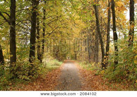 Park Alley In Autumn.