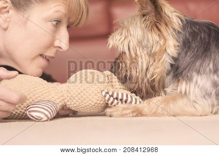 Female mature woman adult playing with yorkie dog
