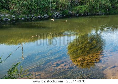 Scenery is partially reflected and the bottom is revealed on the Green River in Kent Washington.