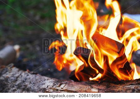 Mesmerizing flames of a burning fire on a blurred background of green grass. Close-up.