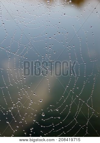 Pearls of dew on the web. A necklace of dewdrops on a cobweb in the early morning