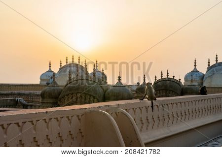 Monkey sitting on a wall facing the sunset against the beautiful domes, spires and arches of an indian fort. Typical of the monkey infested jaipur city with its traditional buildings
