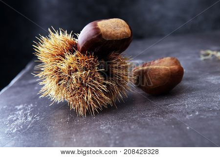 Ripe chestnuts on grey background. Raw Chestnuts for Christmas.
