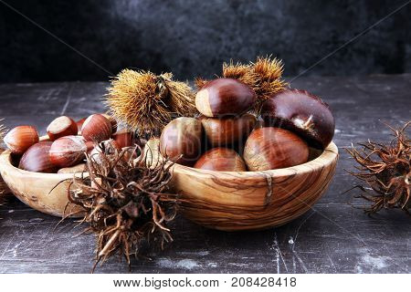 Ripe chestnuts and hazelnus on grey background. Raw Chestnuts for Christmas