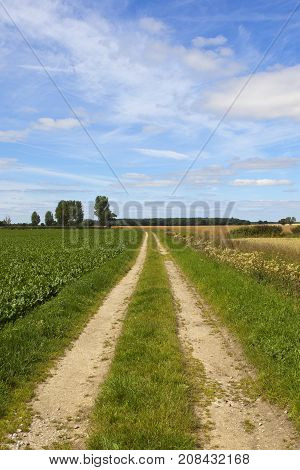 Farm Track And Sugar Beet