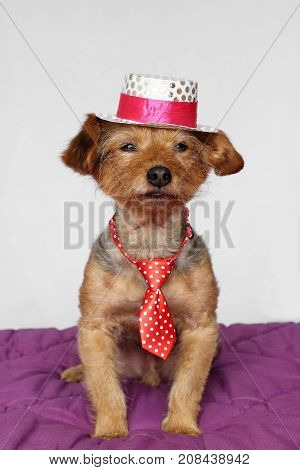 small dog in a sitting position dressed in a red tie and a white and pink hat
