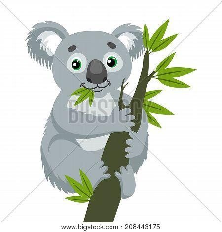 Koala Bear On Wood Branch With Green Leaves. Australian Animal Funniest Koala Sitting On Eucalyptus Branch. Cartoon Vector Illustration. Iconic Marsupials.