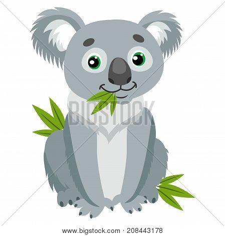 Koala Bear On Green Leaves. Australian Animal Funniest Herbivore Sitting On Eucalyptus. Sitting Bear Cartoon Vector Illustration. Iconic Marsupials.