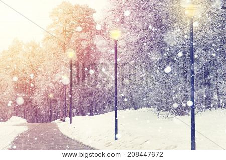 Snowflakes on winter park background. Bright winter sunset. Snowfall in park. Beautiful Christmas theme.