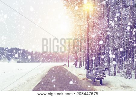 Winter background. Snowfall in Xmas park on sunset. Snowflakes faling on snowy forest. Christmas and New Year theme.