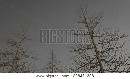 Dark trees without leaves in front of gray sky, 3D render.