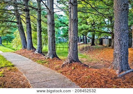 Sidewalk With Row Of Trees In Orange Mulch In Suburban Neighborhood With Path