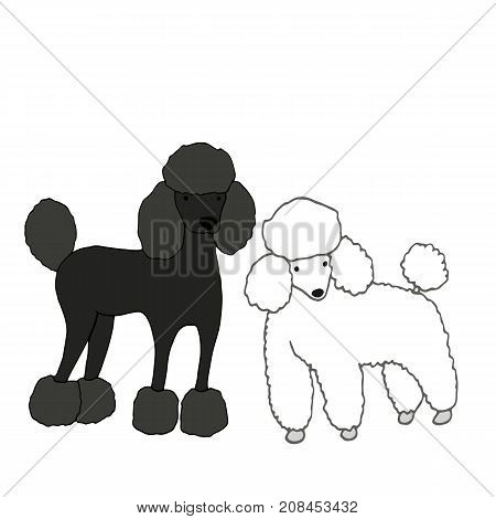 Two cute beautiful dogs one black second white isolated on white background vector hand drawing cartoon style illustration pets fanny poodle.