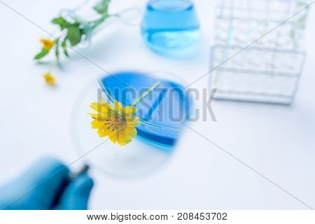 Flower with laboratory glassware with bluel liquids for chemical experimental in laboratory analysis research science background