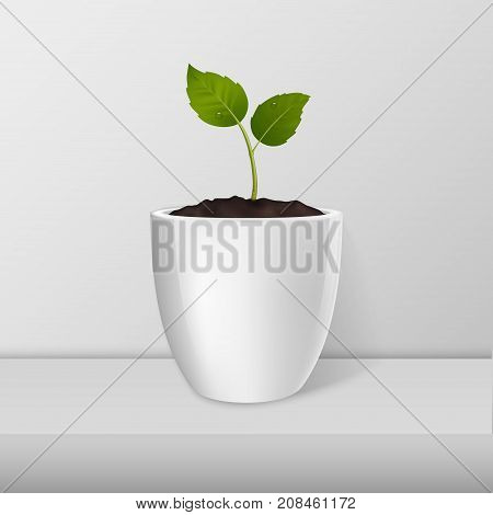 Ecology concept. Vector sprout in a white flower-pot closeup standing on white table. Design template, mockup for branding and advertise. Stock vector illustration, eps10.