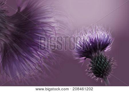 Floral violet background. Flowers composition. A purple flower on a violet background. Closeup. Nature.