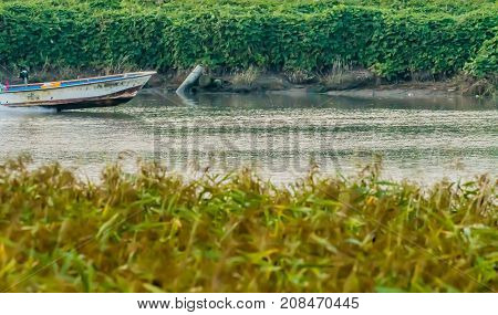 Front half of small motor boat speeding up river with lush green foliage in the background and blurred out foliage in foreground
