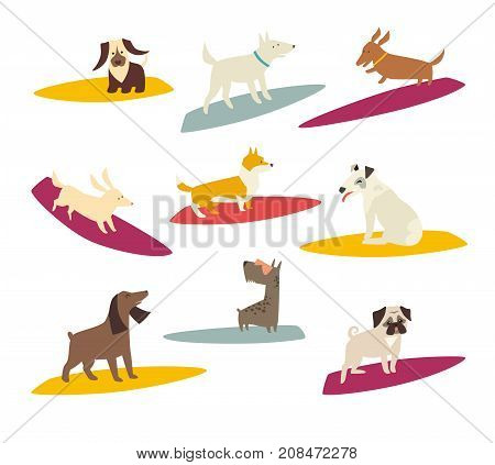 Surfers dog vector cartoon illustrations. Card with funny dog. Dogs breeds on surfboard. Isolated on white