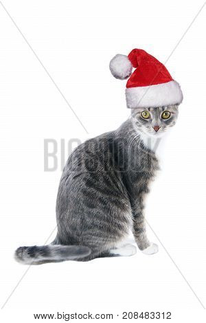 tabby cat wearing santa hat for christmas isolated on white