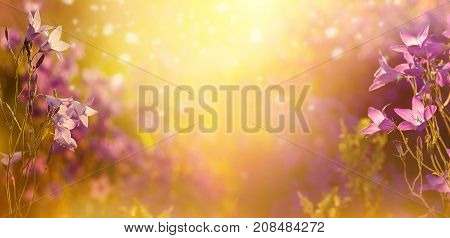 Summer natural background with flowers bells in the sun