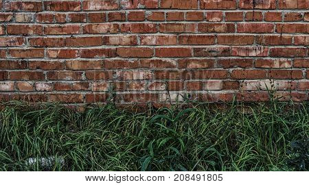 Brick wall and green grass. Brown brick wall. Brown brickwork. Brown and green.