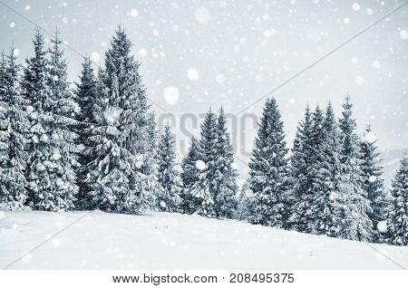 Winter Wonderland With Fir Trees. Christmas Greetings