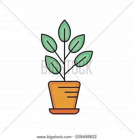 natural plant with leaves inside flowerpot vector illustration