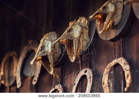 dry pike heads on a wooden wall