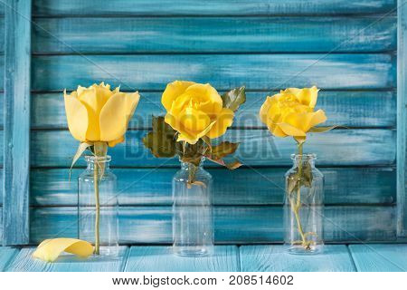 Three Yellow Roses On A Background Of Blue Painted Boards