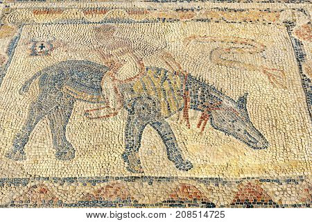 Floor Mosaic In House Of Athlete In Roman Ruins, Ancient Roman City Of Volubilis. Morocco