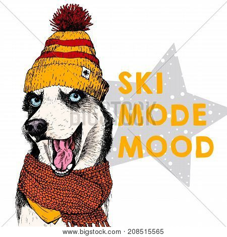 Close up vector portrait of Siberian husky dog wearing beanie and scarf. Ski mode mood. Skecthed colored illustraion. Christmas, Xmas, New year. Party decoration, promotion, greeting card.