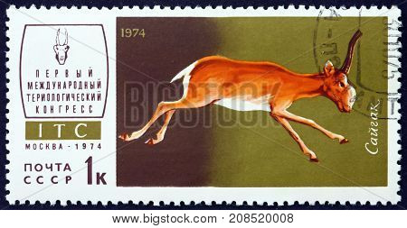 RUSSIA - CIRCA 1974: a stamp printed in the Russia shows Saiga Antelope Saiga Tatarica is a Critically Endangered Antelope circa 1974