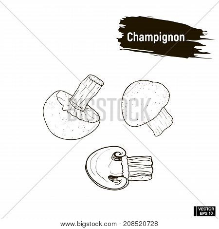 Champignons Mushrooms Hand Drawing Sketch