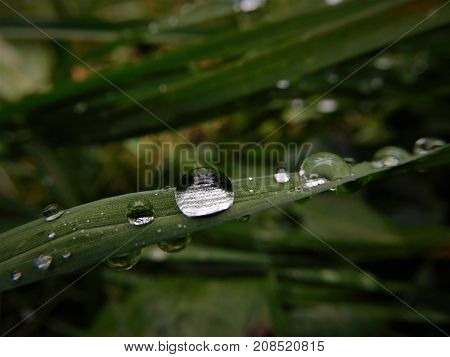 Those waterdrops was created from raining day and next day i going photographing them. It is fascinate what nature can create