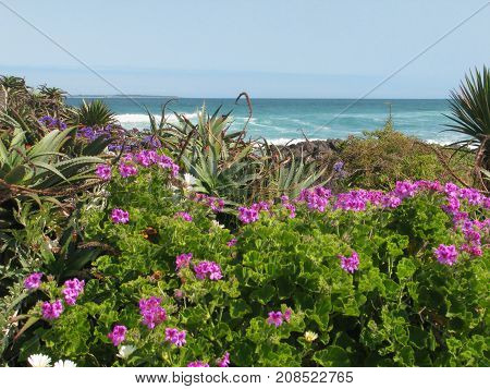 LANDSCAPE, WITH FLOWERS AND OTHER VEGETATION  IN THE FORE GROUND, AND THE SEA IN THE BACK GROUND