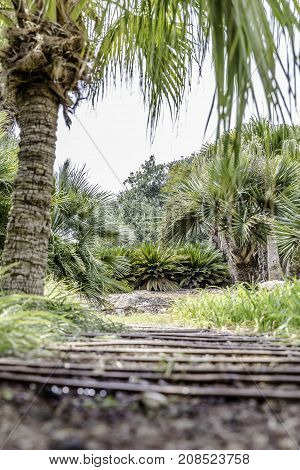 Passage in the lush green tropical garden with grass trees and bushes from ground low angle
